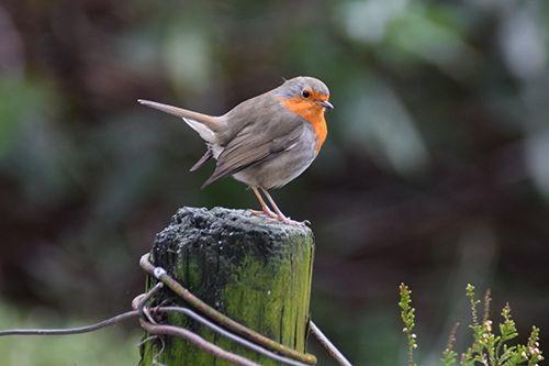 Vogels Nederland Tuin : Vogels tellen nieuws flora marckx